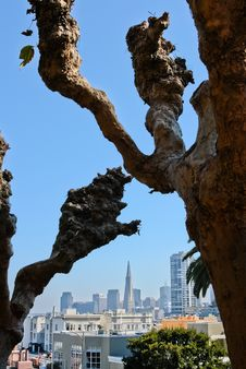 Free San Francisco Lombard Crooked Trees Stock Images - 22042574