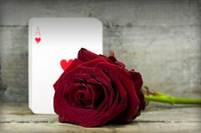 Free Rose And Ace Stock Photography - 22043002