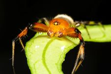 Free Crab Spider, Macro Shot Stock Photo - 22043840