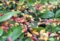 Free Colors Of Autumn Stock Photo - 22056350