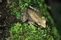 Free Tropical Rana Frog Stock Photo - 22059190