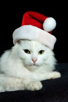 Free White Christmas Cat Royalty Free Stock Photos - 22050208