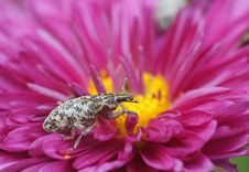 Free Bug Royalty Free Stock Photos - 22052268