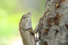 Free A Lizard Climbing The Tree Stock Photos - 22059043