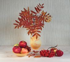 Free Leaves Of A Mountain Ash Are In A Vase. Stock Image - 22064371