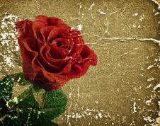 Free Red Rose Stock Photography - 22065322