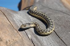 Snake Slithering In Tree Stock Images