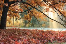 Free The Sun S Rays In Autumn Meadow Royalty Free Stock Images - 22073399