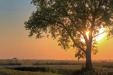Free Crone Of Tree Stock Photography - 22077572