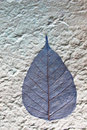 Free Dries Leaves Attached On Mulberry Paper Stock Images - 22080884