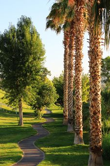 Free Palm Trees In Park Royalty Free Stock Photos - 22082148