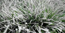 Free Frozen Grass Royalty Free Stock Photography - 22085277
