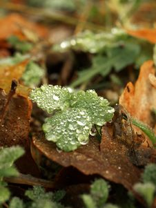 Free Autumn Dew Stock Images - 22090424