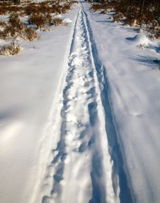 Free Traces Of Sledge On The Snow Stock Photos - 22094403