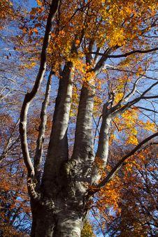 Free Trees Stock Photos - 22095023