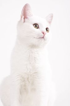 Free Cat Analyzing Royalty Free Stock Photo - 22097315