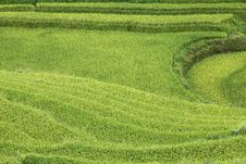 Free Rice Fields In Sapa, Vietnam. Royalty Free Stock Image - 22098066