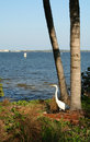 Free Great White Heron By The River Stock Photography - 2218952