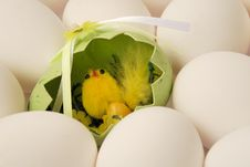Free Chicken With Eggs 2 Royalty Free Stock Photo - 2210075