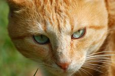 Free A Close Look At A Cat. Stock Photo - 2212700