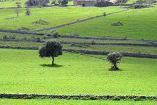 Free Sicilian Landscape Royalty Free Stock Photo - 2213915