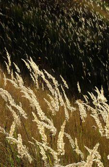 Free Grassy Landscape Stock Images - 2213934