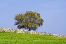 Free Sicilian Landscape Royalty Free Stock Image - 2214006
