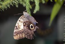Free Butterfly Royalty Free Stock Photos - 2214148