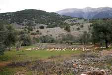 Free Pasture In Mountains, Gorge Ar Stock Photography - 2215232