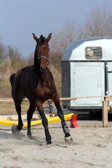 Free Dark Brown Horse. Stock Image - 22102681