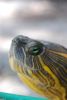 Free Face Turtle Royalty Free Stock Images - 22103399