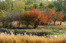 Free Autumn Scenery Royalty Free Stock Photography - 22107777