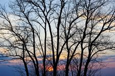 Free Tree Silhouette At Sunset. Royalty Free Stock Image - 22110146