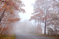 Free Forest Road Stock Photography - 22111852
