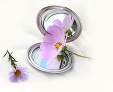 Free Mirror And Flower S Royalty Free Stock Image - 22113256