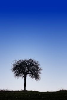 Free Lonely Tree Silhouette Royalty Free Stock Photography - 22117517