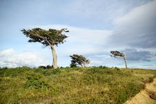 Free Tree Against The Wind Royalty Free Stock Photo - 22117565