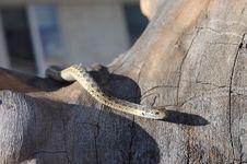 Free Slithering Snake Stock Images - 22119644