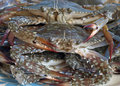 Free Raw Crabs Royalty Free Stock Photography - 22123147