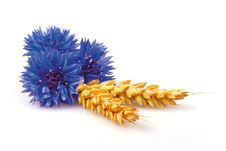 Free Cornflowers And Ears Royalty Free Stock Photography - 22122207