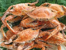 Free Boiled Crabs Royalty Free Stock Photos - 22123158