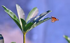 Free Butterfly Stock Image - 22125271