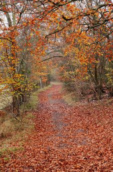 Free Late Autumn On An English Woodland Track Royalty Free Stock Photography - 22127127