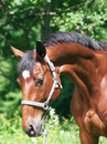 Free Portait Of Wonderful Glam Breed Mare Royalty Free Stock Photography - 22130267
