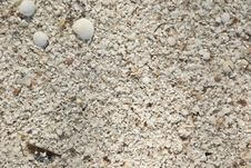 Background Of The Seashell Sand Beach Abstraction Stock Photos