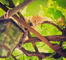 Free Young Kitten Sitting On Branch Stock Images - 22131804