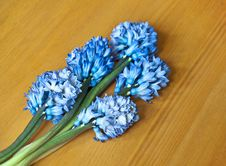 Free Hyacinth Raceme Stock Photo - 22131840