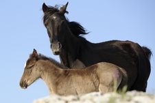 Free Mare And Foal Royalty Free Stock Image - 22133966