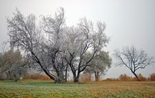 Fog On The Meadow Stock Photography