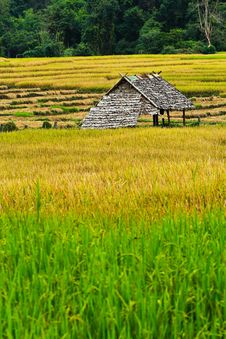 Free Hut In The Fields Of Green, Yellow Stock Photos - 22141213